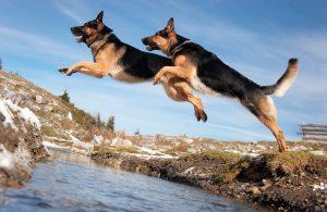 Hunde_bei_der_Bundeswehr